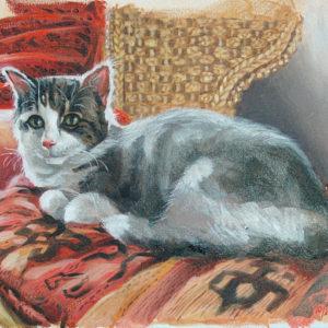 Portrait de Chausette, chat de goutière